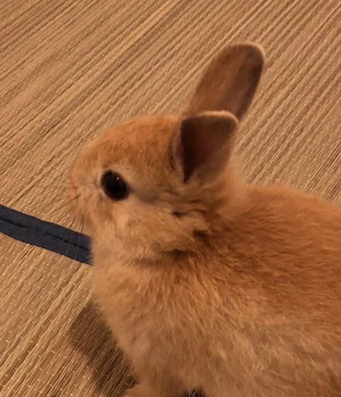 rabbit-sub-190614-2